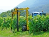 Trimmer for vineyard model model 220T