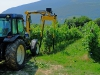Trimmer for vineyard model model 220T at work